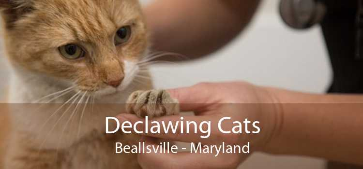 Declawing Cats Beallsville - Maryland