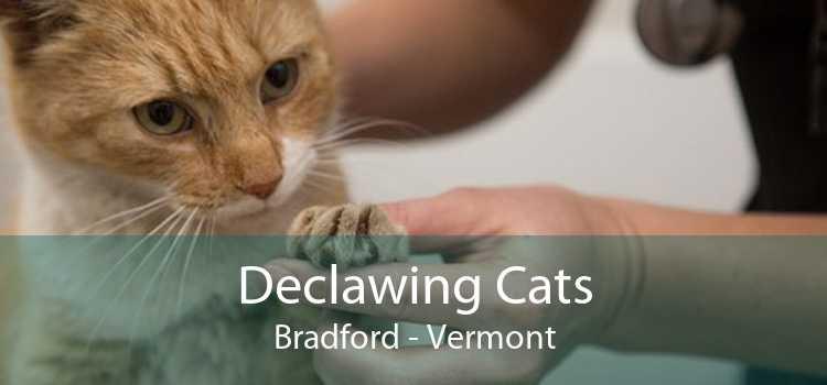 Declawing Cats Bradford - Vermont