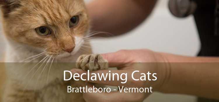 Declawing Cats Brattleboro - Vermont