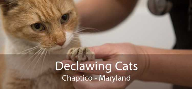Declawing Cats Chaptico - Maryland