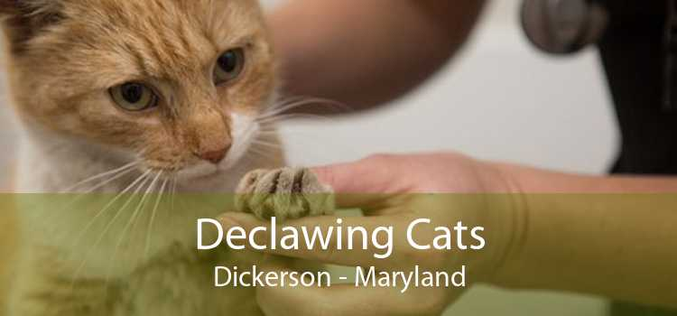 Declawing Cats Dickerson - Maryland
