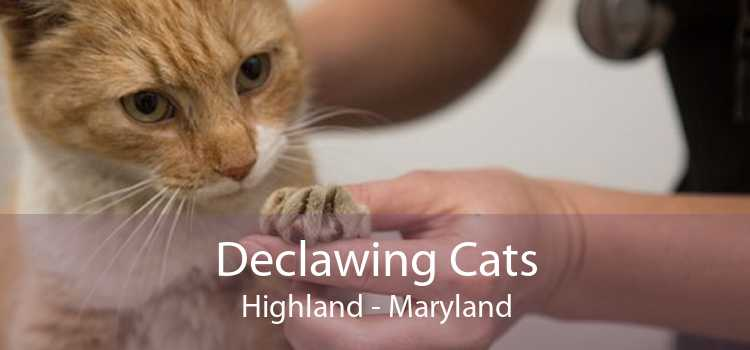 Declawing Cats Highland - Maryland