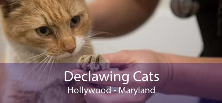 Declawing Cats Hollywood - Maryland