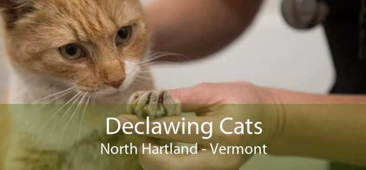 Declawing Cats North Hartland - Vermont