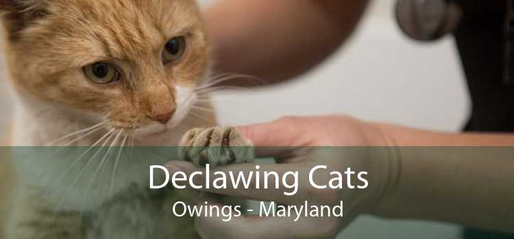 Declawing Cats Owings - Maryland