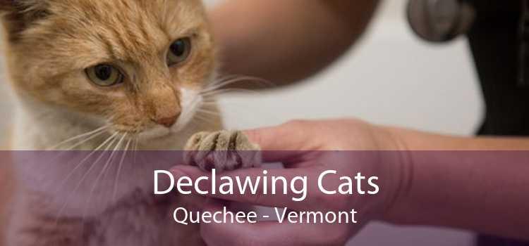 Declawing Cats Quechee - Vermont