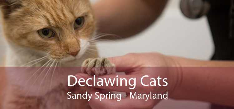 Declawing Cats Sandy Spring - Maryland
