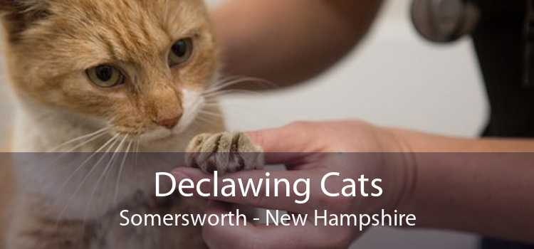 Declawing Cats Somersworth - New Hampshire