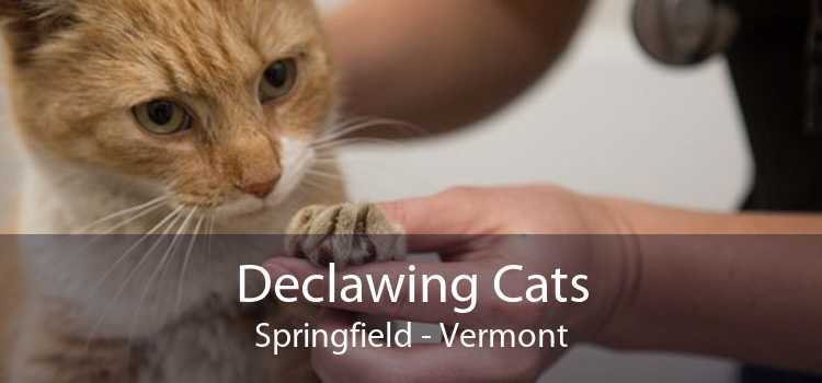 Declawing Cats Springfield - Vermont
