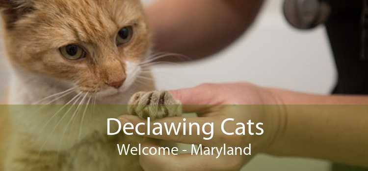 Declawing Cats Welcome - Maryland