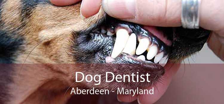 Dog Dentist Aberdeen - Maryland