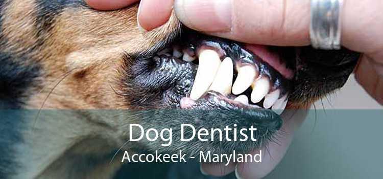 Dog Dentist Accokeek - Maryland