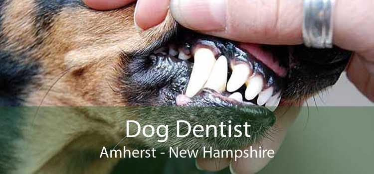 Dog Dentist Amherst - New Hampshire