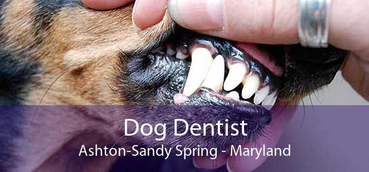 Dog Dentist Ashton-Sandy Spring - Maryland