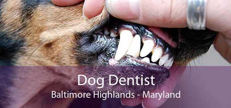 Dog Dentist Baltimore Highlands - Maryland