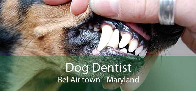 Dog Dentist Bel Air town - Maryland