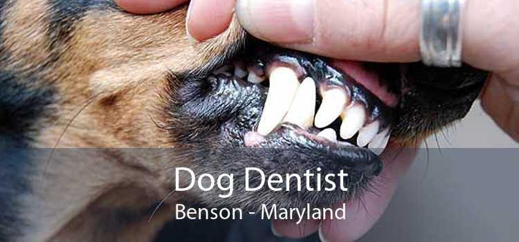 Dog Dentist Benson - Maryland
