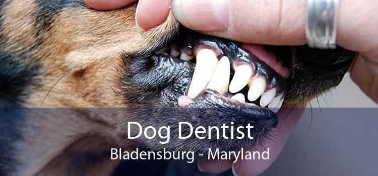 Dog Dentist Bladensburg - Maryland