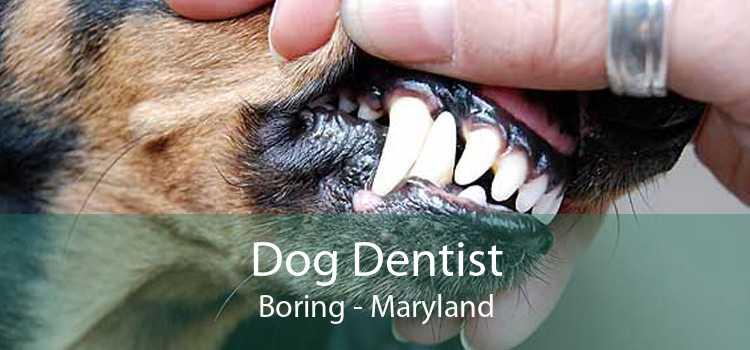 Dog Dentist Boring - Maryland