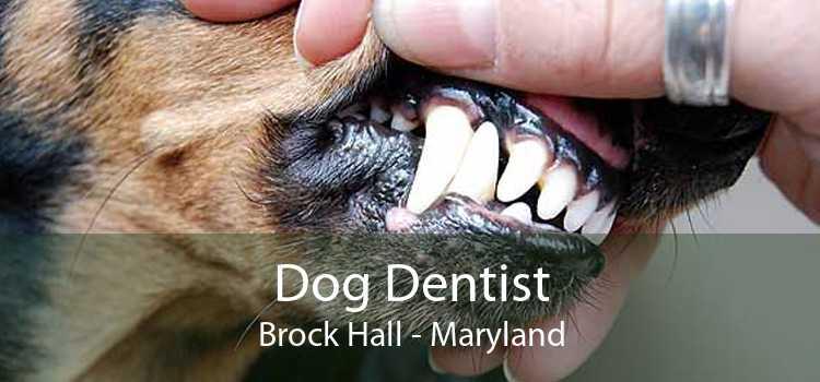 Dog Dentist Brock Hall - Maryland