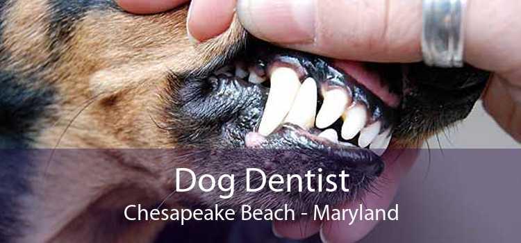 Dog Dentist Chesapeake Beach - Maryland