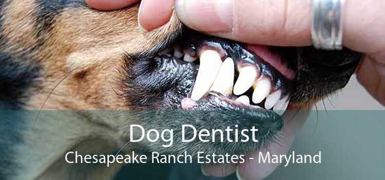 Dog Dentist Chesapeake Ranch Estates - Maryland