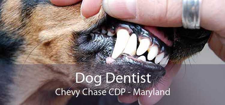 Dog Dentist Chevy Chase CDP - Maryland