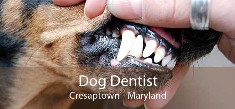 Dog Dentist Cresaptown - Maryland
