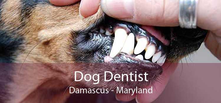 Dog Dentist Damascus - Maryland