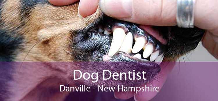 Dog Dentist Danville - New Hampshire
