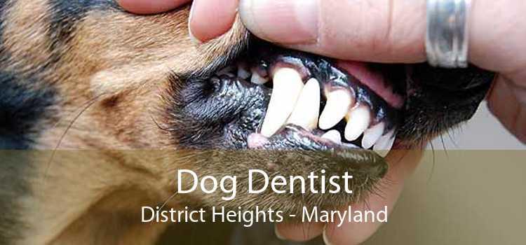 Dog Dentist District Heights - Maryland