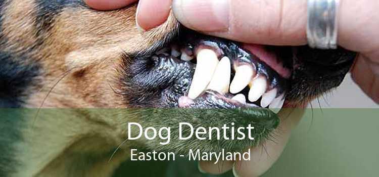 Dog Dentist Easton - Maryland