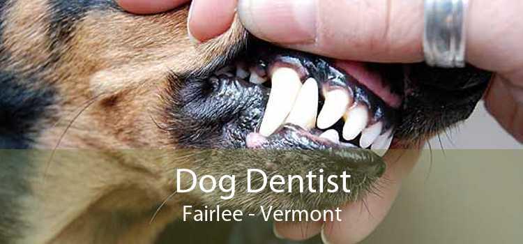 Dog Dentist Fairlee - Vermont