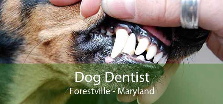 Dog Dentist Forestville - Maryland