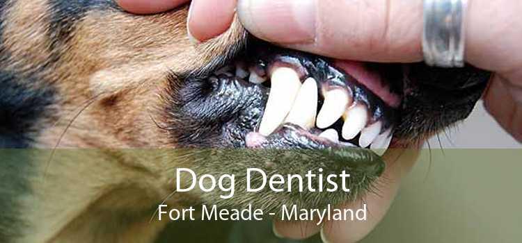 Dog Dentist Fort Meade - Maryland