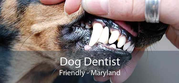 Dog Dentist Friendly - Maryland