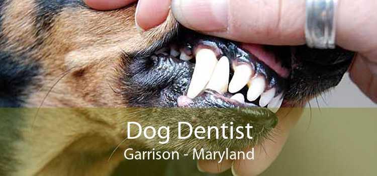 Dog Dentist Garrison - Maryland