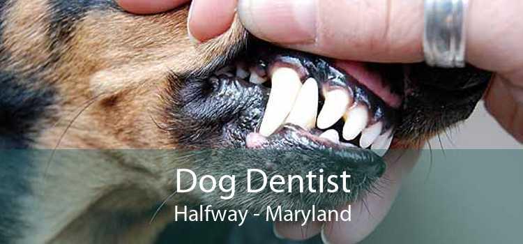 Dog Dentist Halfway - Maryland