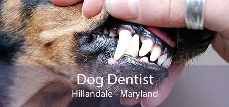 Dog Dentist Hillandale - Maryland