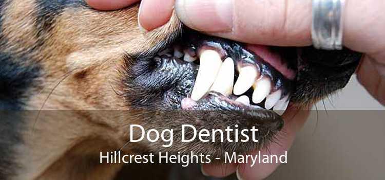 Dog Dentist Hillcrest Heights - Maryland