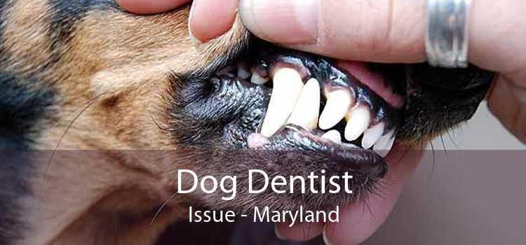 Dog Dentist Issue - Maryland