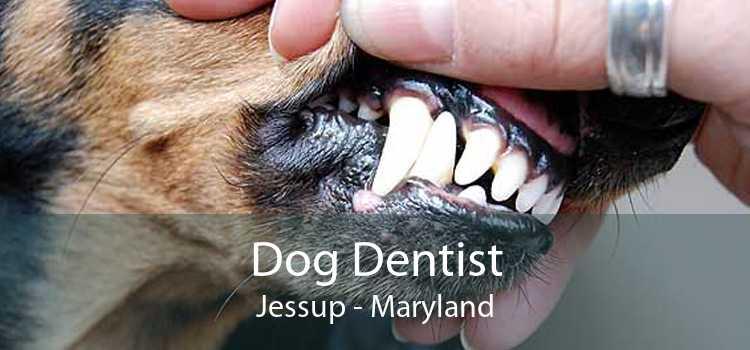 Dog Dentist Jessup - Maryland