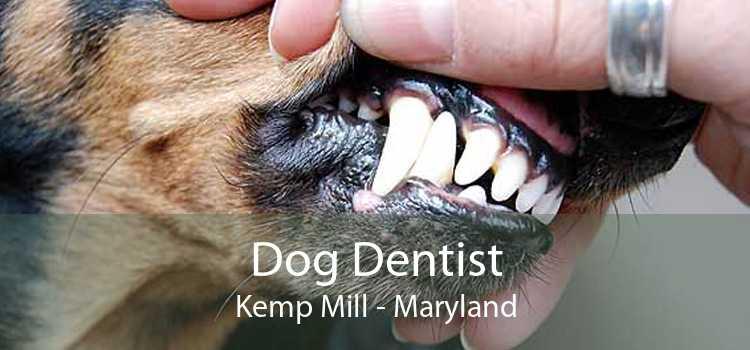 Dog Dentist Kemp Mill - Maryland