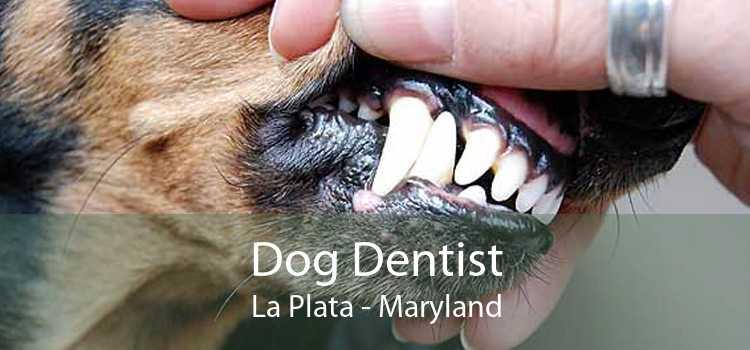 Dog Dentist La Plata - Maryland