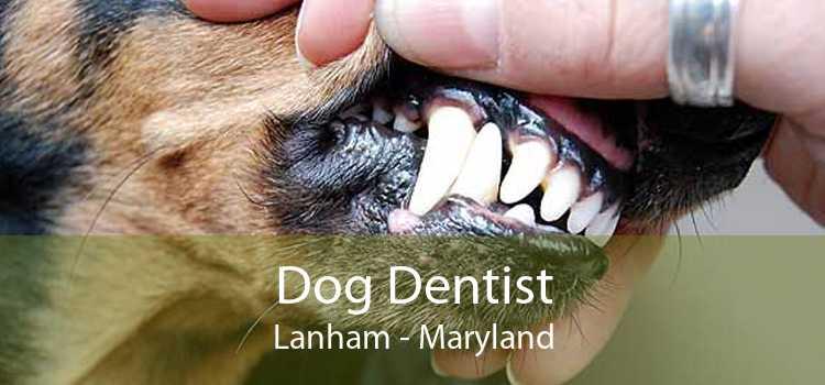 Dog Dentist Lanham - Maryland