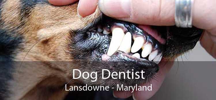 Dog Dentist Lansdowne - Maryland