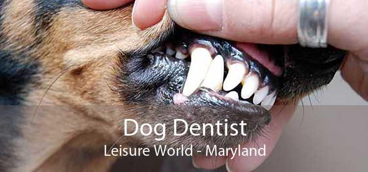 Dog Dentist Leisure World - Maryland