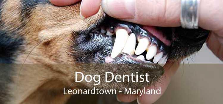 Dog Dentist Leonardtown - Maryland