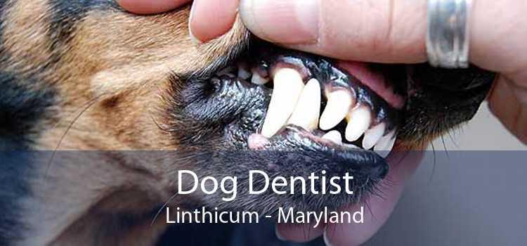 Dog Dentist Linthicum - Maryland