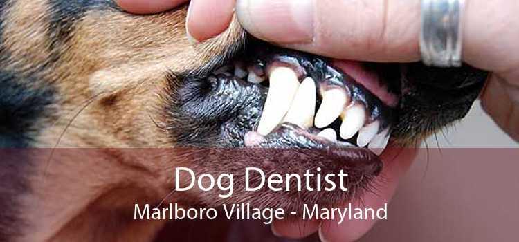 Dog Dentist Marlboro Village - Maryland